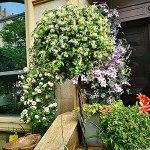 Cadre d'escalade de Plantes en métal Jardin Treillis Support de Fleurs Support sphérique en Fer forgé pour Plantes légumes vignes Escalade