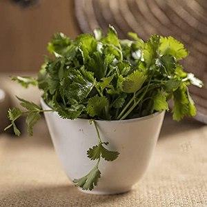 FStening 150 Pièces Graines De Coriandre Uniques Vertes Heirloom A Une Odeur Spéciale Souvent Utilisée Comme Herbes Auxiliaires Collocation De Légumes Plantés à L'intérieur à L'extérieur