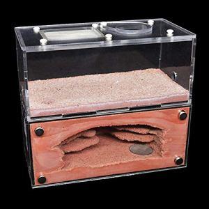 WWL Hôtels à Insectes Béton de Haute qualité écologique Ant Farm Acryl Ant Maison Pet Anthill Château Atelier Sable Nid Sandcastle Insectes Boîte 16x7x14CM (Color : Orange, Size : 16x7x14CM)