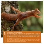wildtier herz | Mangeoire Écureuil en Bois Massif I Distributeur de Nourriture – Imperméable et Résistant aux Intempéries – Mangeoire pour Écureuils