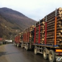 Legea care interzice comerțul cu masă lemnoasă a fost adoptat de Senat. Ce sancțiuni riscă cei care încalcă aceste dispoziții