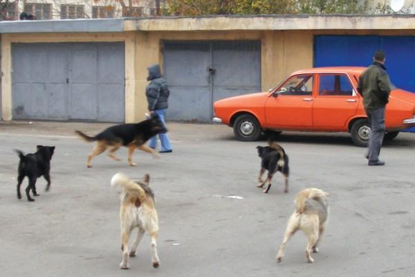 Reguli pentru deținătorii de câini de companie, la Vulcan