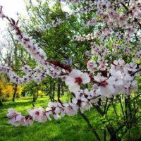 Temperaturi scăzute în această primăvară. Cum îți afectează fluctuațiile organismul și obiceiurile alimentare