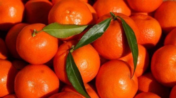Secretul clementinelor din supermarketuri. Ce sunt de fapt. Mai cumperi?