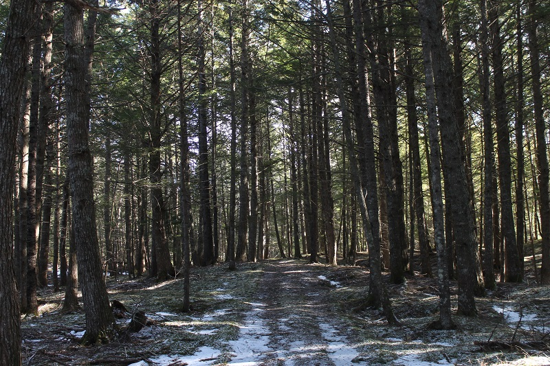forest bathing, shinrin-yoku, forest, winter, Nova Scotia