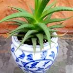 4 Secrets for Successful Succulents