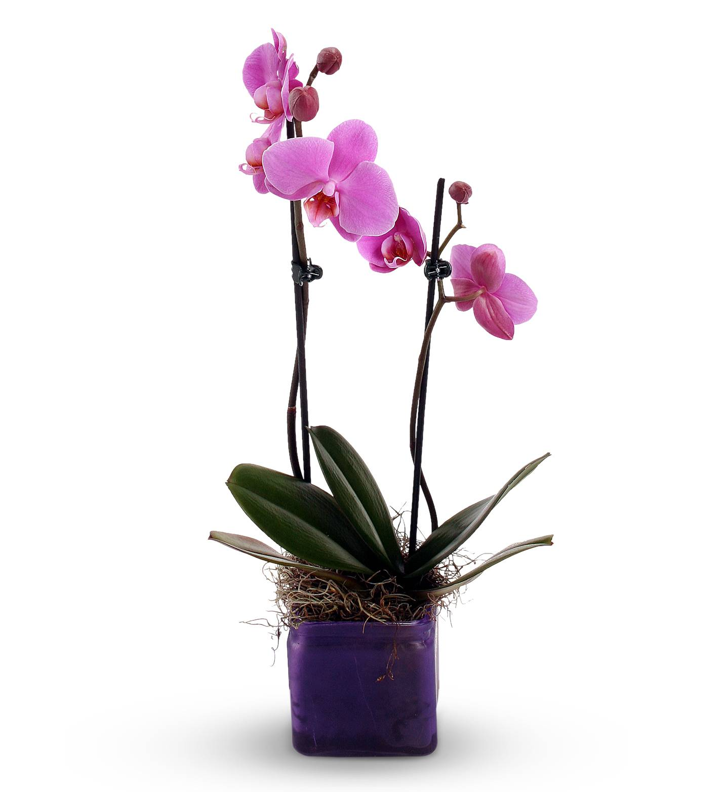 How To Take Care Of An Orchid Plant Avas Flowers