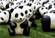 Panda World Tour