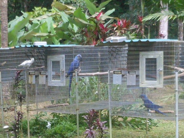 Image result for hyacinth macaw farm