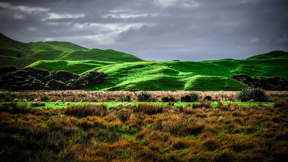 hills near cape farewell. sheeps are grasing at the foot of the hill