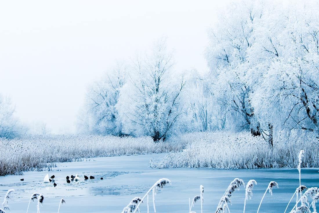 beautiful winter landscape scene with frozen trees and birds in the river