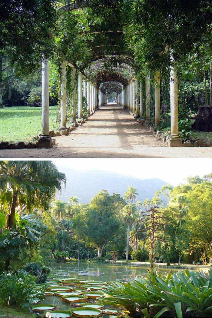 Botanical garden in Rio!! Click through to read why Rio is the greatest city on earth!