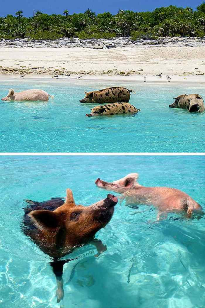 Exuma (Pig Beach), Bahamas. 15 of the World's Most Unique & Awesome Beaches! Click through to read the full post!