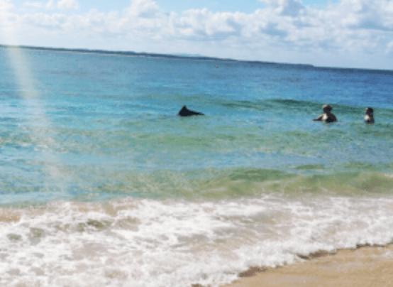 ¿Tiburones en Australia?