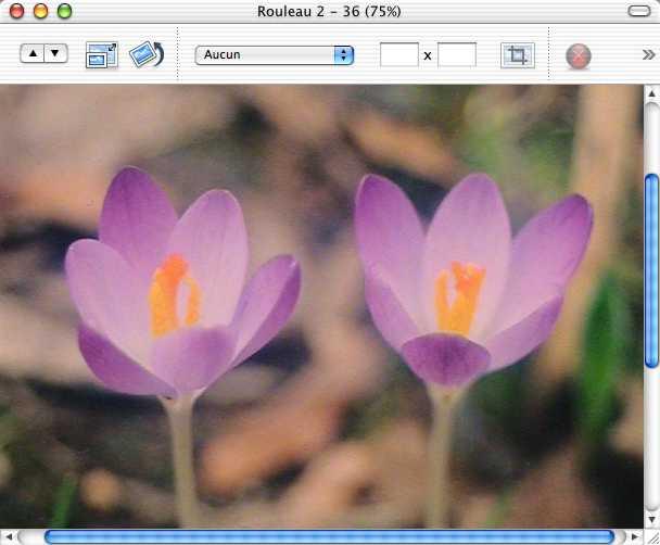 iPhoto 2.0 2003 window