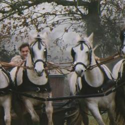 Le char celtes