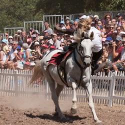 spectacle-equestre-chevalerie-ranrouet-2016-petit-bleus-photos-img_0454
