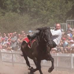 spectacle-equestre-chevalerie-ranrouet-2016-petit-bleus-photos-img_0462