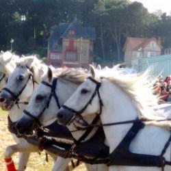 course-de-char-184008250-aventureaugalop