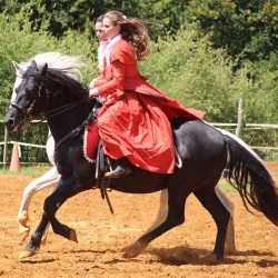 spectacle-equestre-carrousel