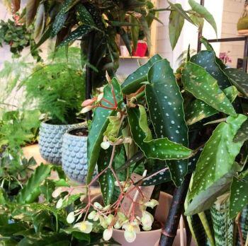 jardinerie-nantes-jane-atelier-aventuredeco (4)