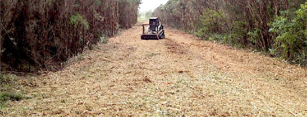 Commercial land management forestry mulching- Aver Contracting in Colorado