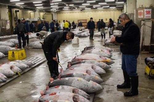 Tsukiji Market Auction
