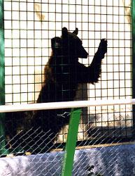 Ours zoo du faron