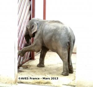 Tania éléphante du zoo de Targu-Mures