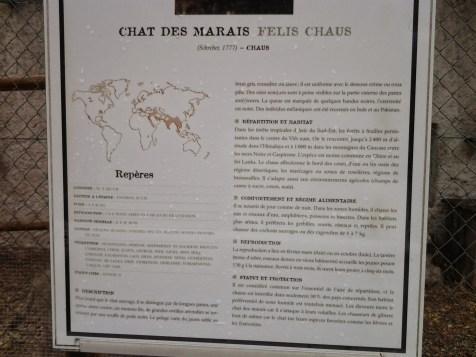 23. Chat des marais
