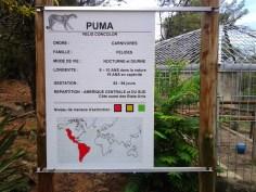 4. Puma