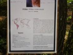 42. Puma