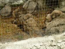 70. Chat des marais malade