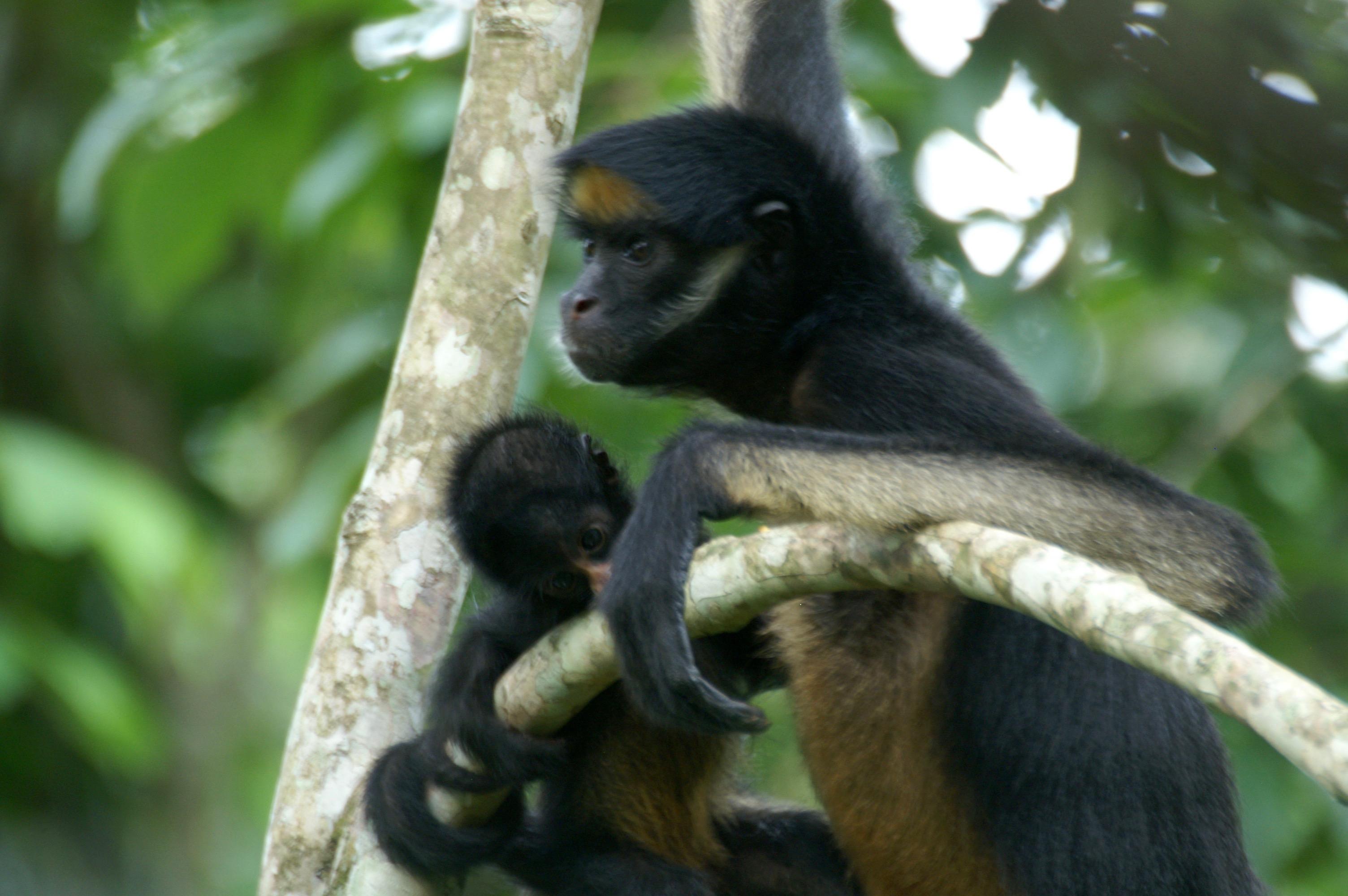 Soutenez le refuge pour animaux sauvages d'Equateur AmaZOOnico !
