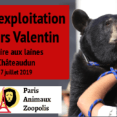 Ours Valentin à la Foire aux Laines de Châteaudun les 6 & 7 juillet 2019 : pétition et appel à la manifestation