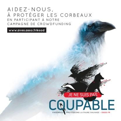 Visuel corbeaux