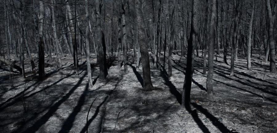 , Λόης Λαμπριανίδης: Οι πυρκαγίες και οι δομικές παθογένειες του ελληνικού κράτους, INDEPENDENTNEWS