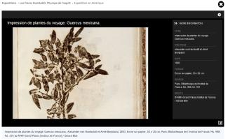 Impression de plantes du voyage. Guercus mexicana. Alexander von Humboldt et Aimé Bonpland, 1803, © RMN-Grand Palais (Institut de France) / Gérard Blot