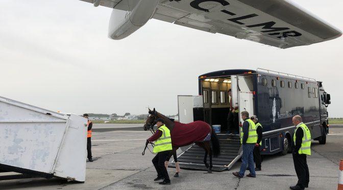 Cómo es transportar caballos de carreras por avión. Unos clientes muy sensibles.