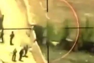 video mangusta in afghanistan