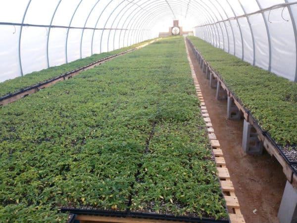 farm e1585775489940