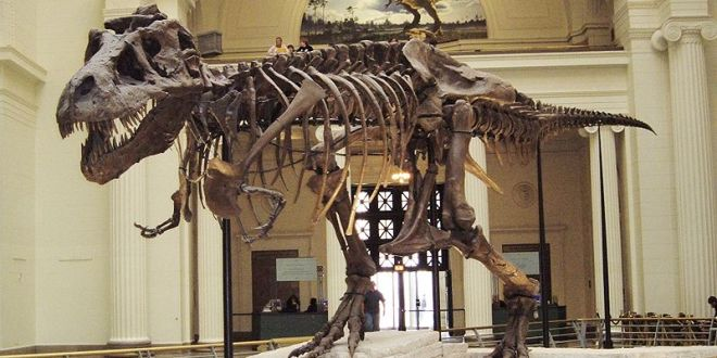 Sue T-Rex at Chicago Field Museum. Author: Michael Gray from Wantagh NY, USA