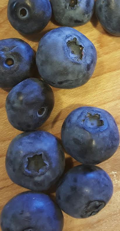 Fresh Wild Blueberries