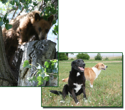 Pups and Bear | A Voice of Nature