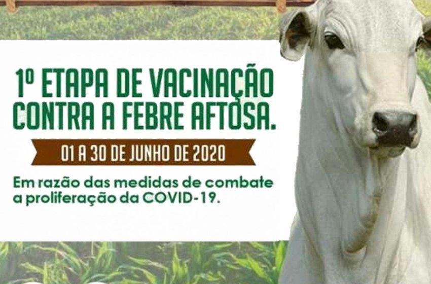 Tem início a Campanha de Vacinação contra a Febre Aftosa 2020