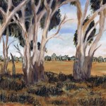 Trees by dry lake bed at wyperfeld national park