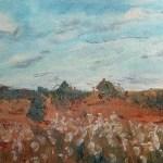 paper daisies, little desert