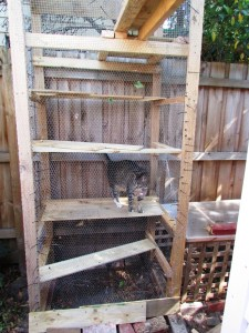 Timber cat enclosure completed. Contents: 1 large cat.