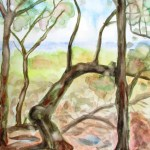 Watercolour paiting showing very bent eucalpytus trees