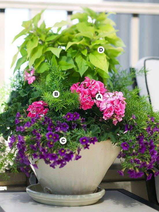 Plants Wholesale Clay Pots